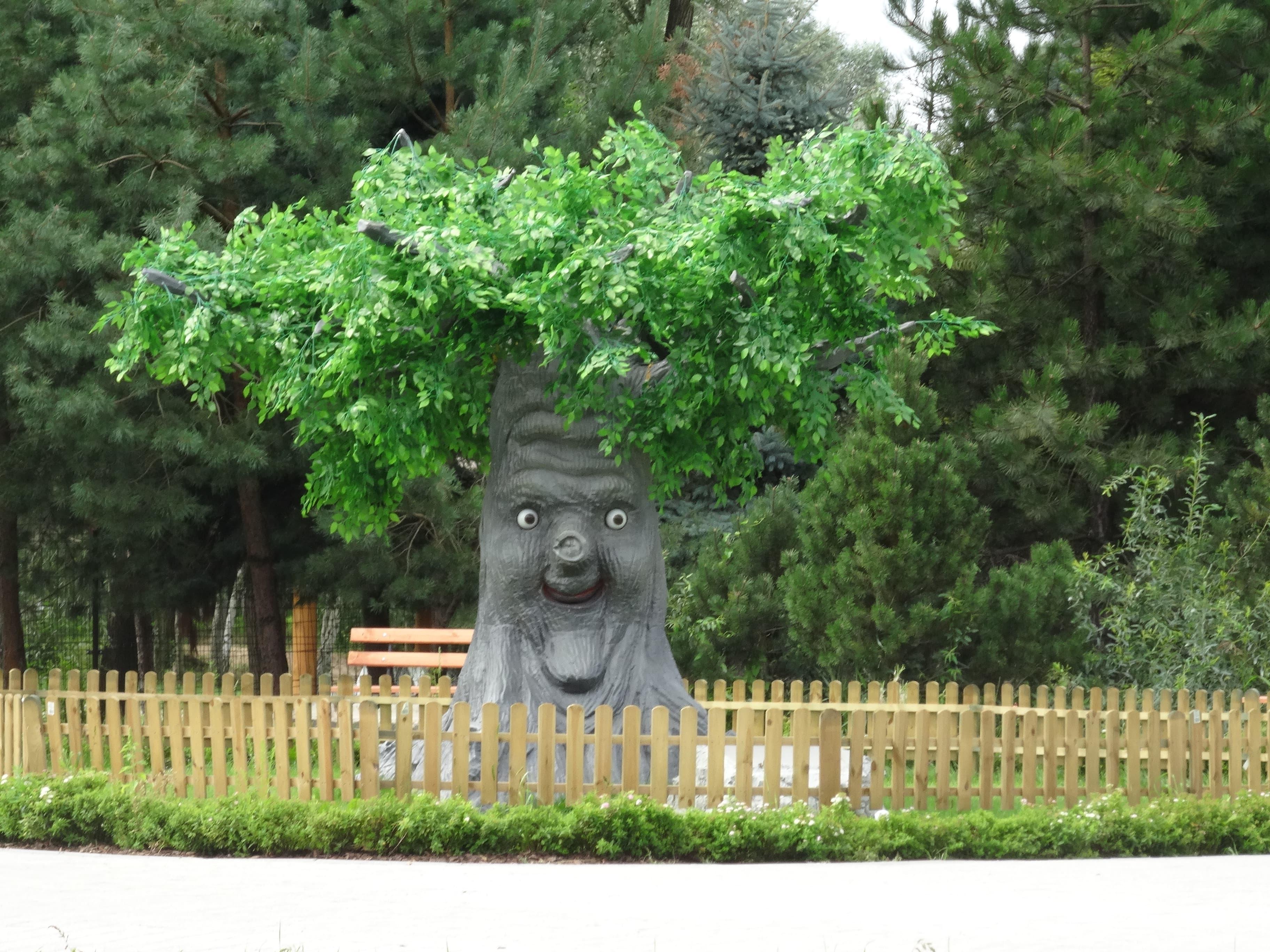 zielona-oliwka-gadajace-drzewo