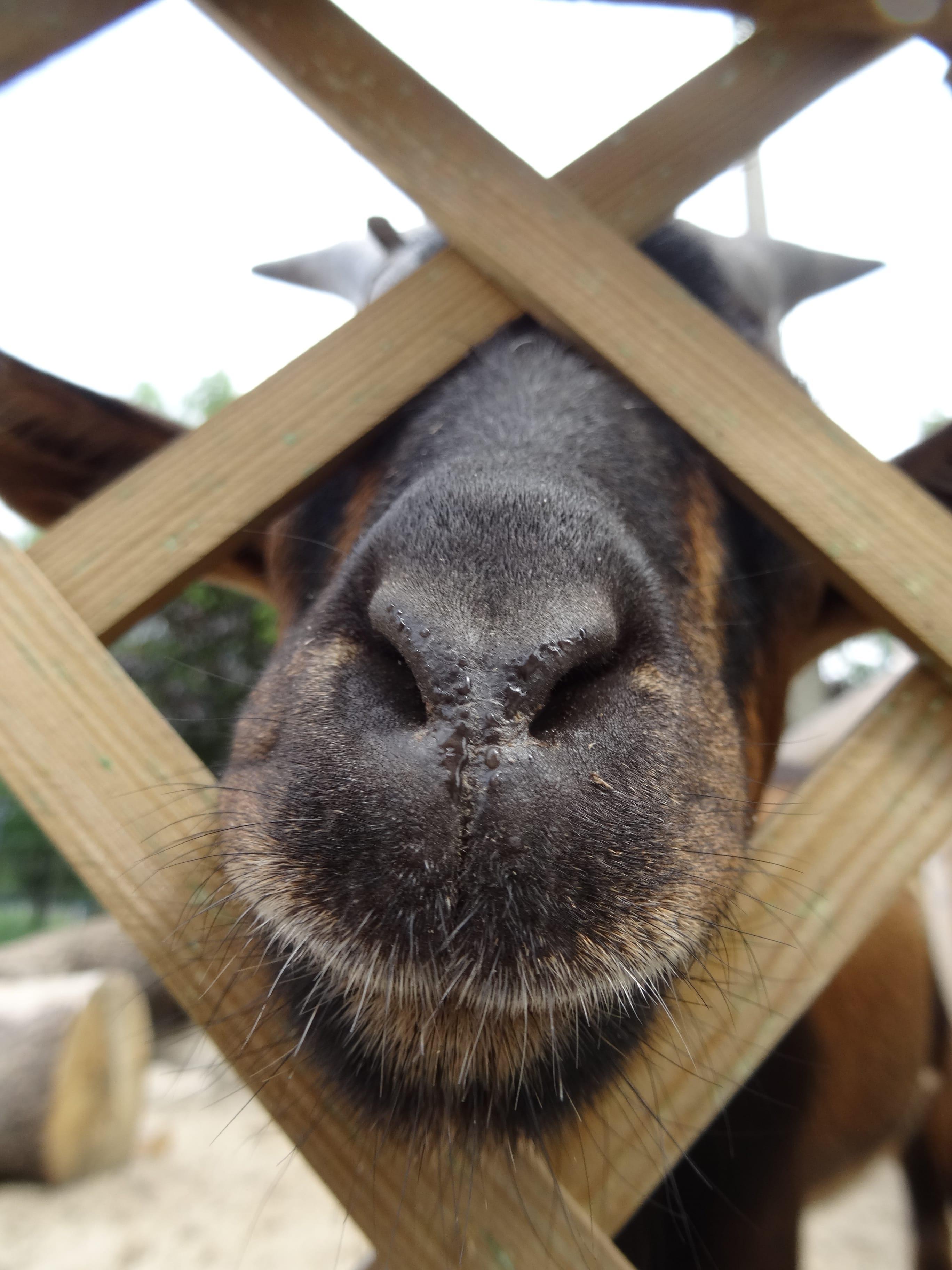 zielona-oliwka-zwierzyniec-koza