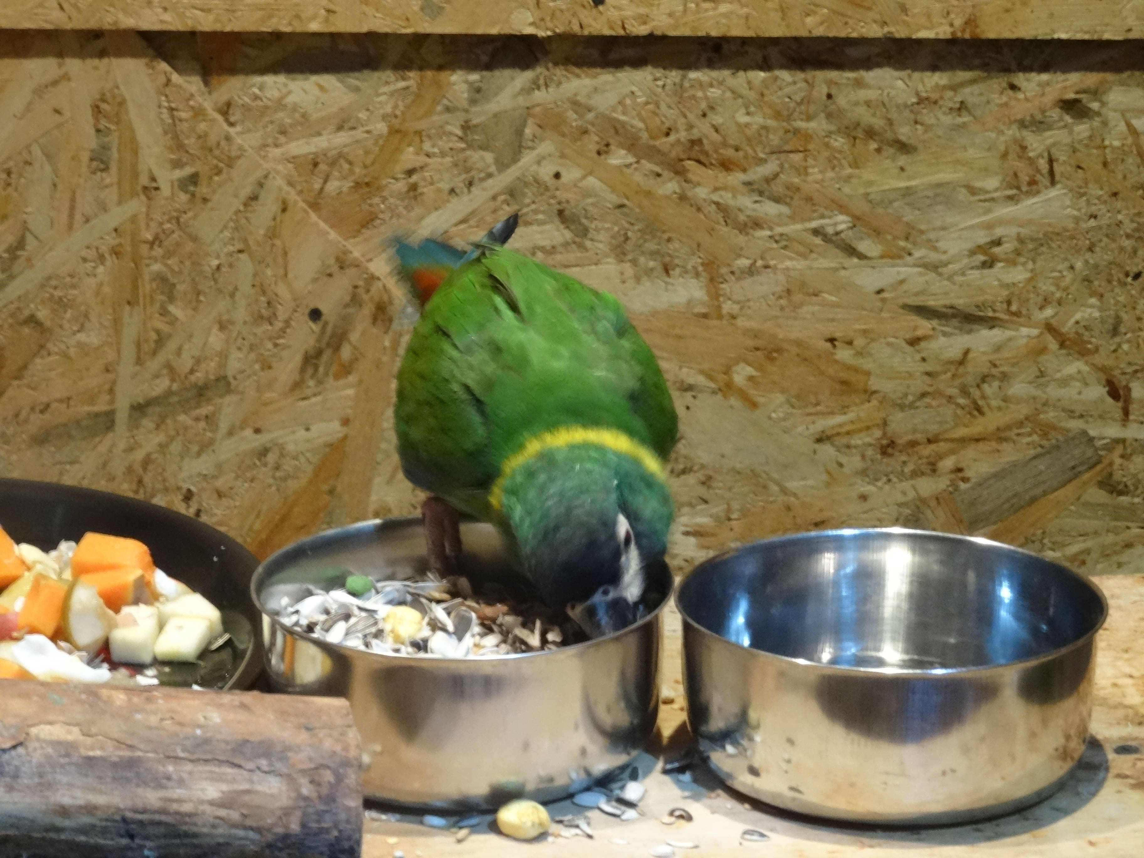 papugarnia-wroclaw