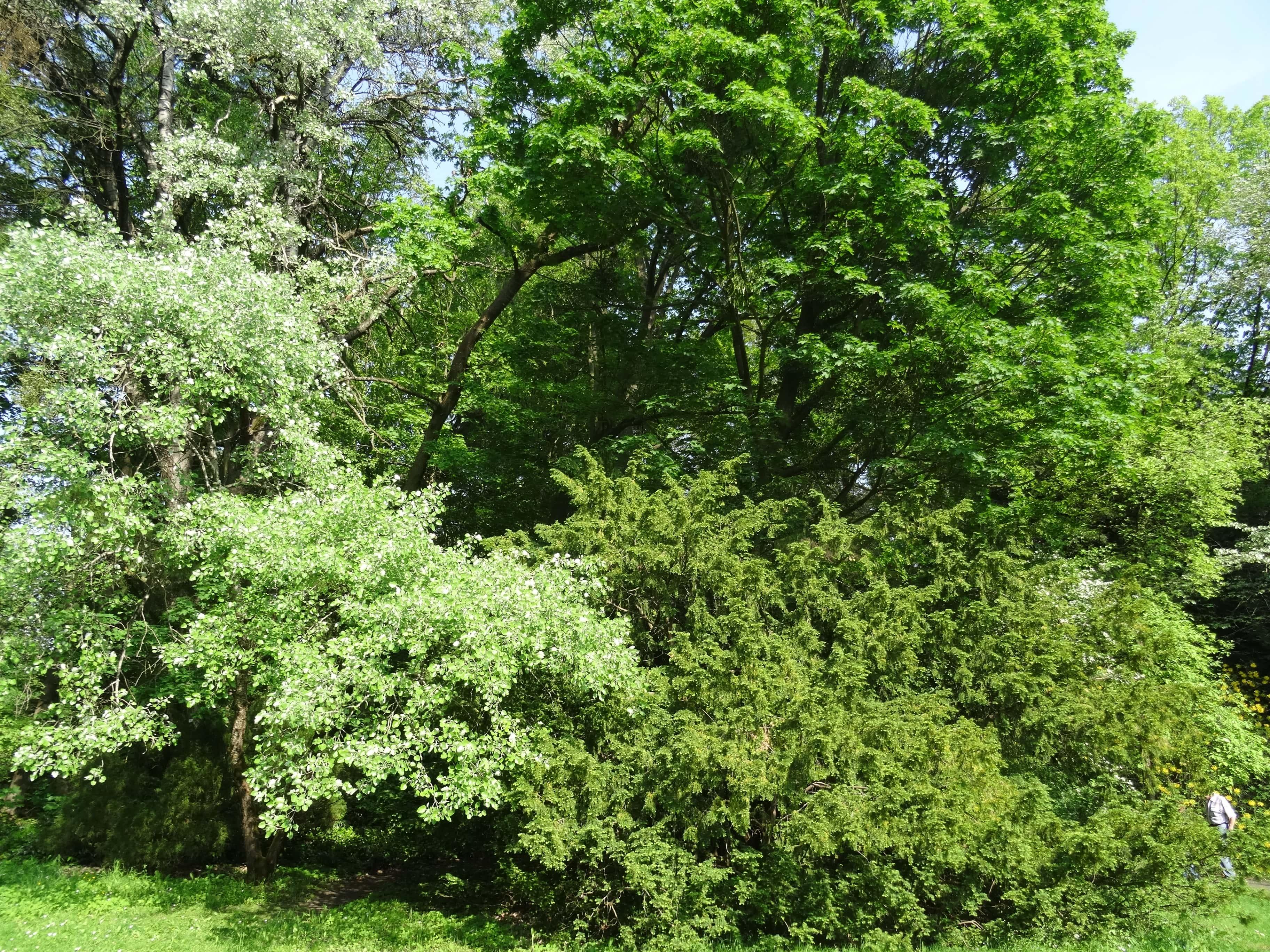 arboretum-lipno