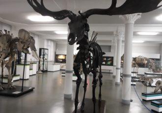 muzeum-przyrodnicze-wrocław