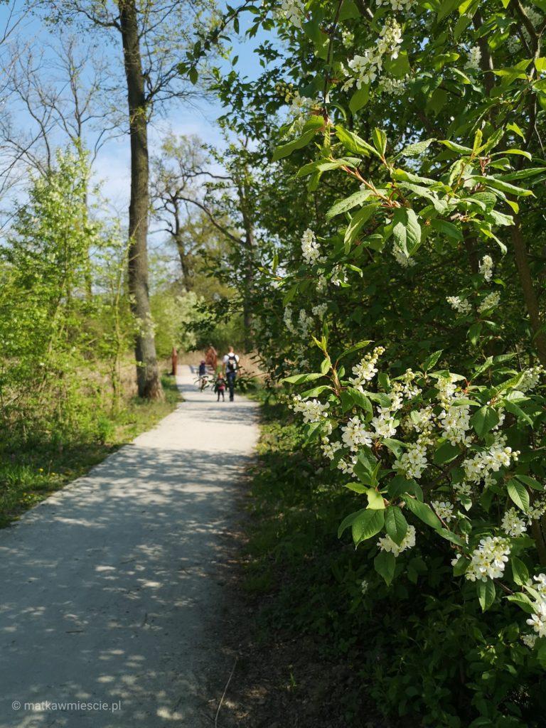 park-krajobrazowy-alejka