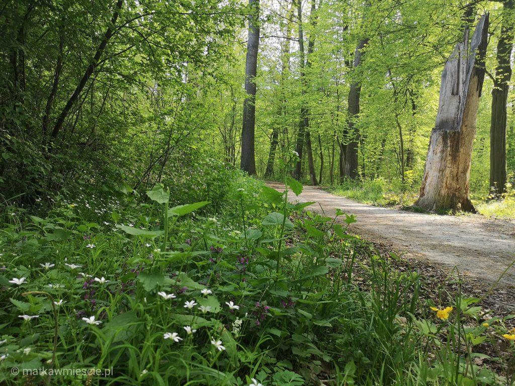 dolina-bystrzycy-lesna-drozka