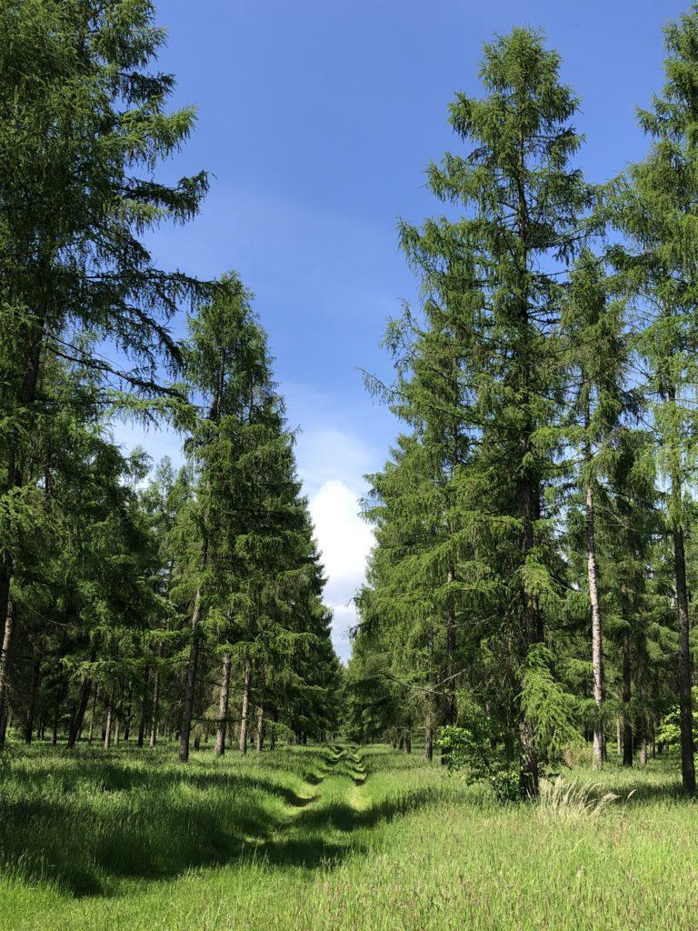 alejka-przez-las