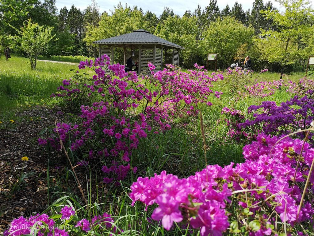 arboretum-kwiaty-stradomia