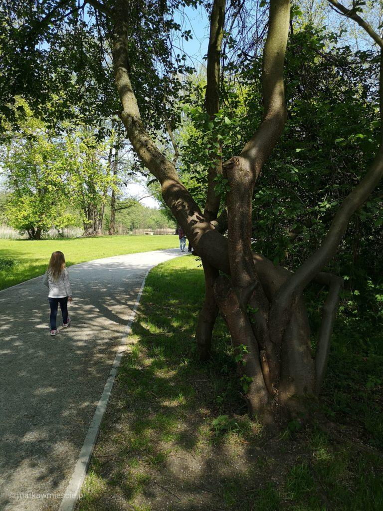 park-szczodre-drzewo