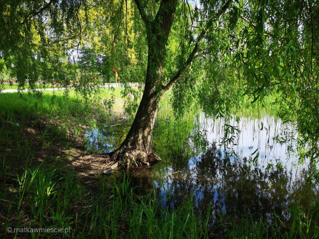 park-szczodre-drzewo-w-wodzie
