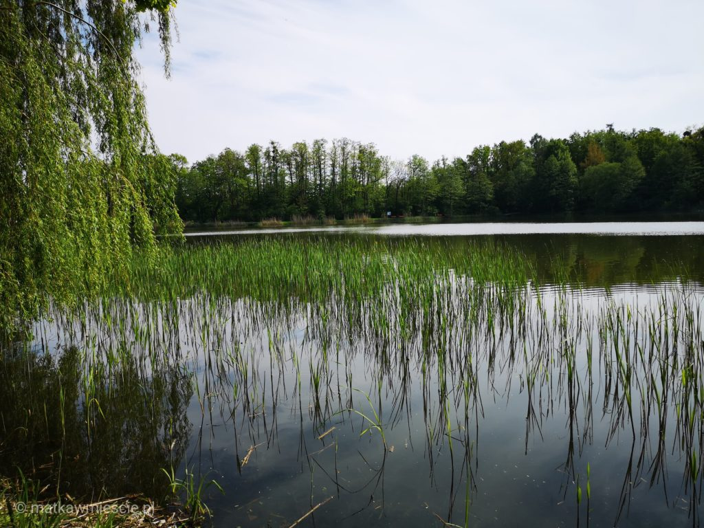 szczodre-park-woda