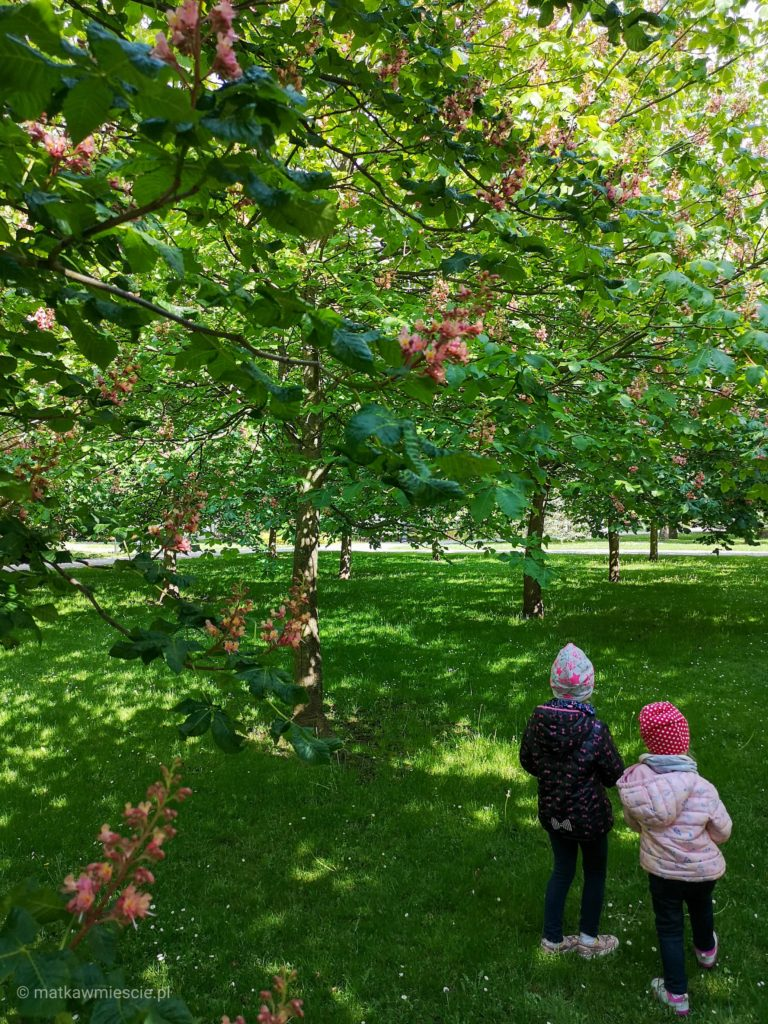 pod-kwitnacymi-drzewami-kudowa