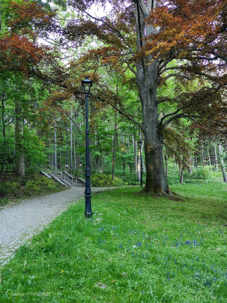 kudowa-park-zdrojowy