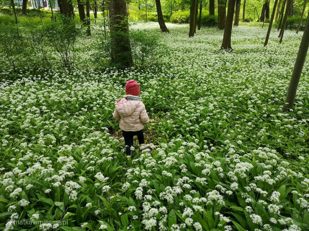 kwiaty-park-zdrojowy