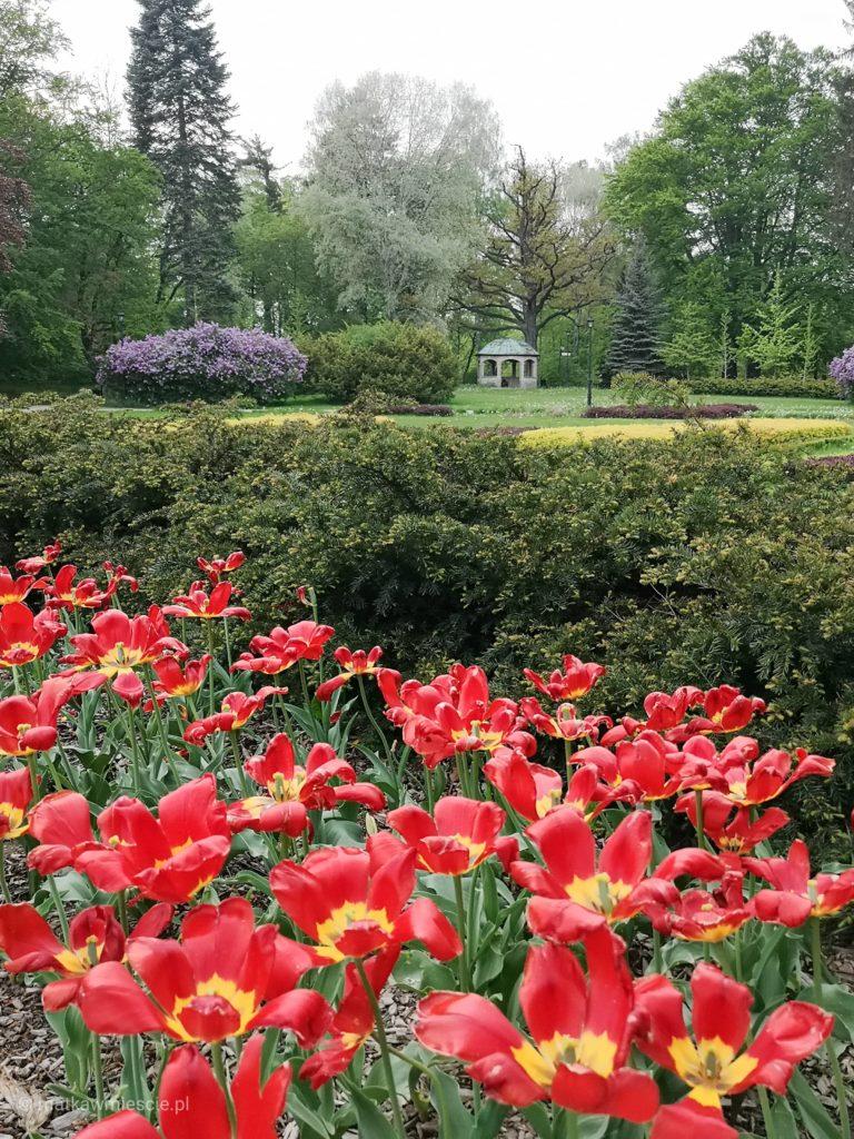 park-zdrojowy-tulipany