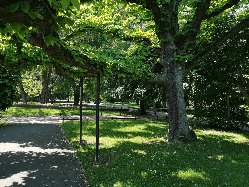 podparte-drzewo-park-oliwski