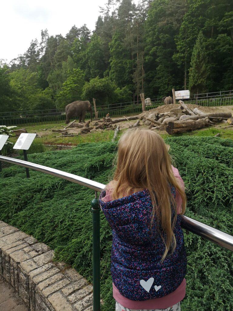 zoo-gdansk-slonie