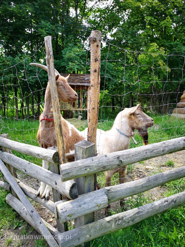 kozy-osada-gornicza
