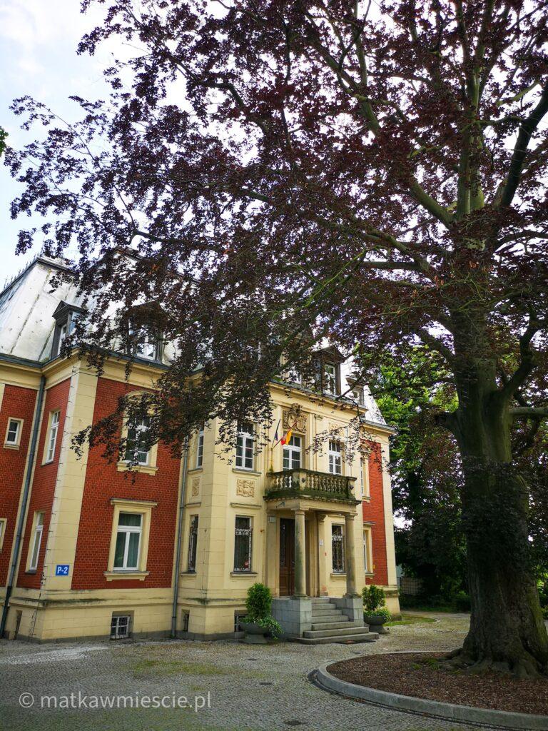 drzewo-pałac-pawłowice
