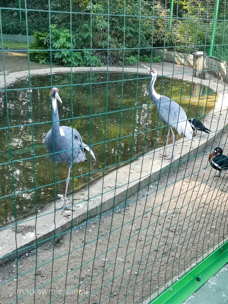 ptaki-ptaszarnia-lubin