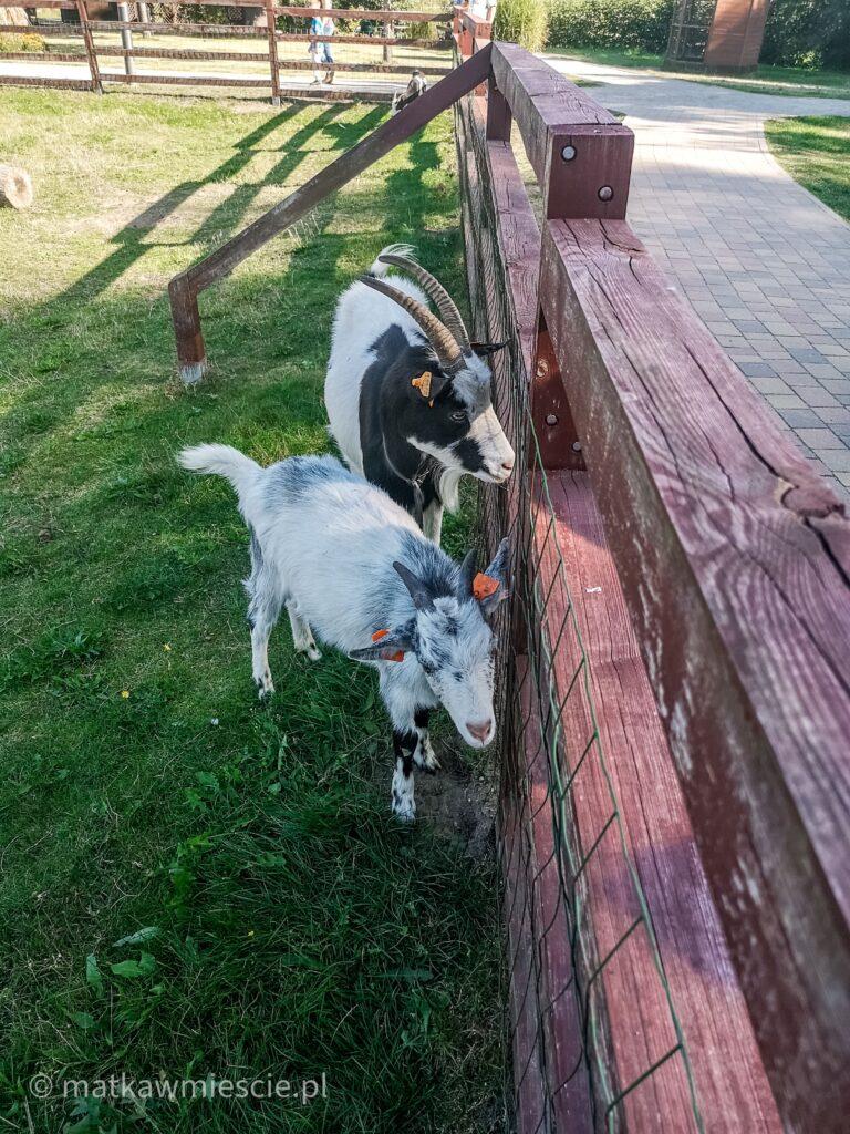 kozy-zagroda-lubin