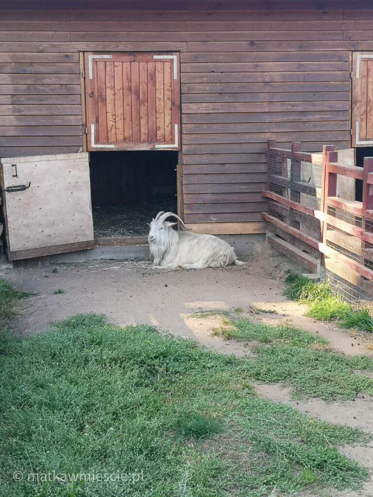koza-park-wrocławski