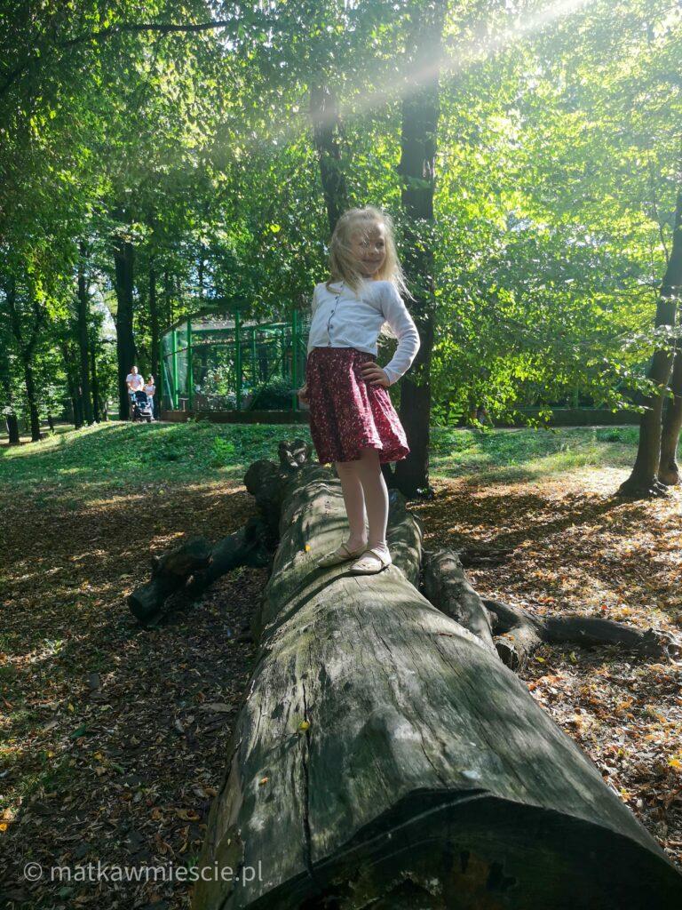 park-wrocławski-na-pniu