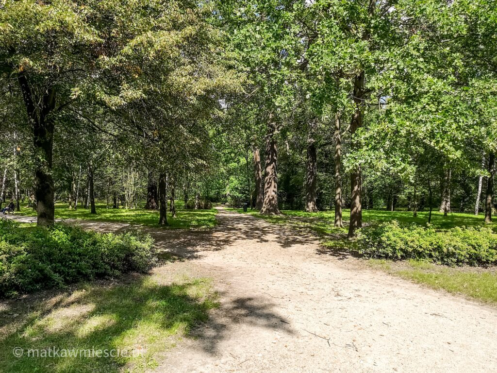 park-leśnica-alejki-spacerowe