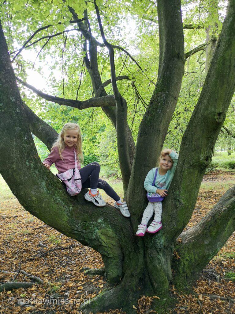 park-leśnica-dzieci-na-drzewie