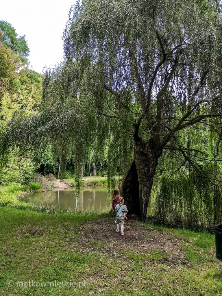 drzewo-staw-park