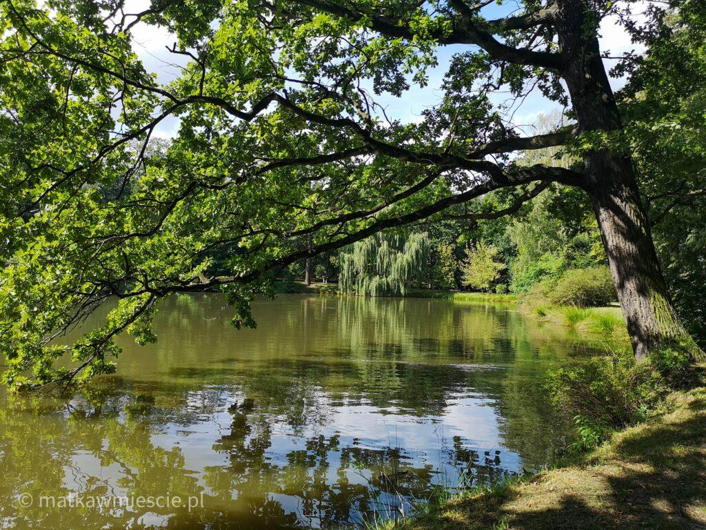staw-w-parku-leśnickim