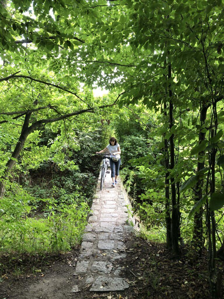 dróżka-mostek-w-lesie