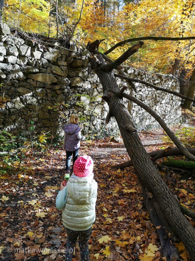 zwalone-drzewo