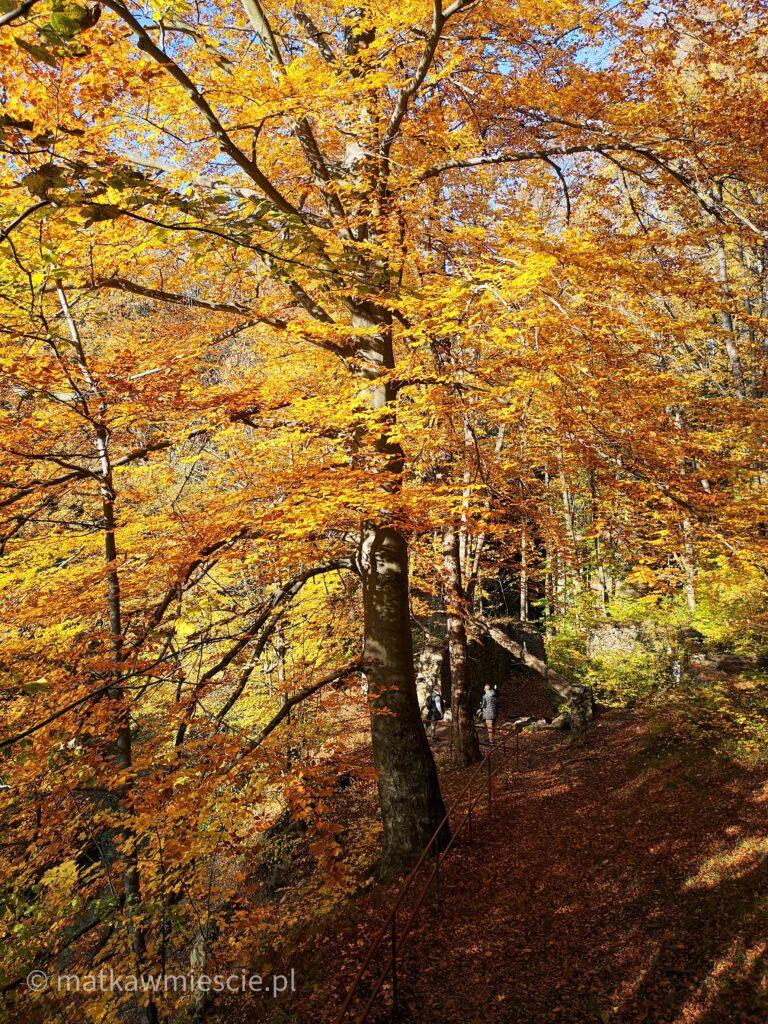 złota-jesień