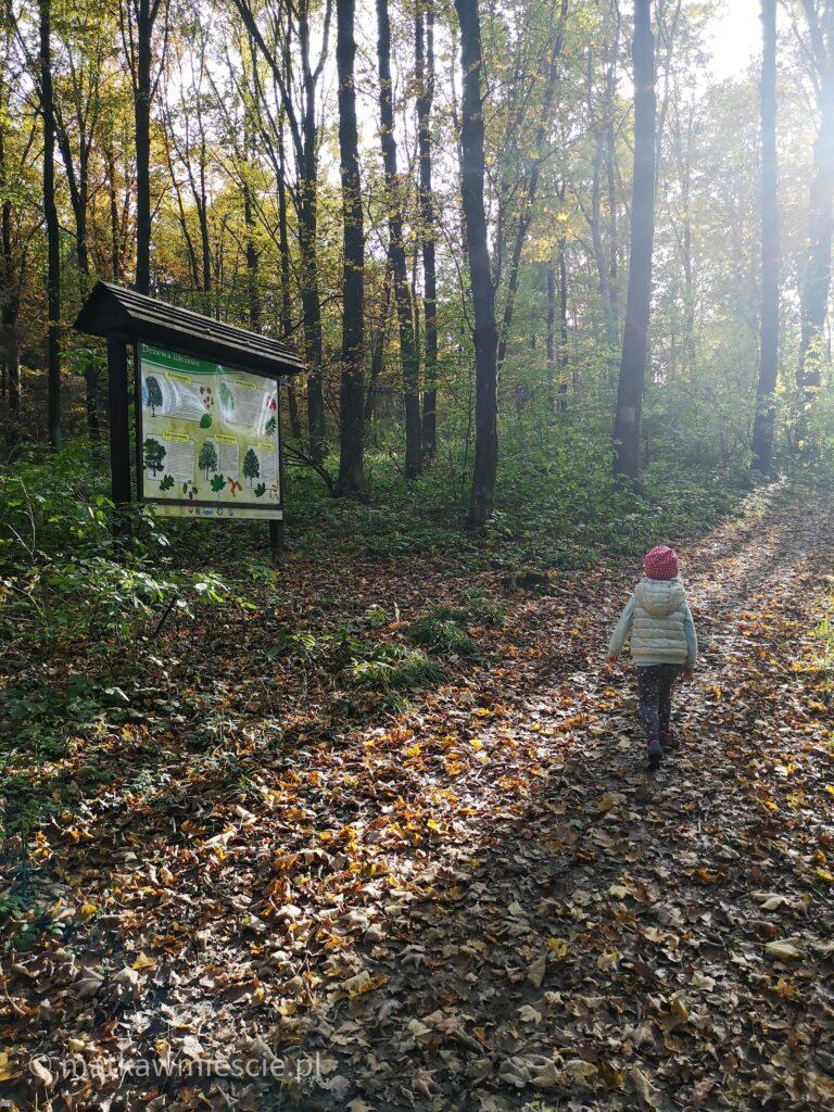 ścieżka-edukacyjna-las