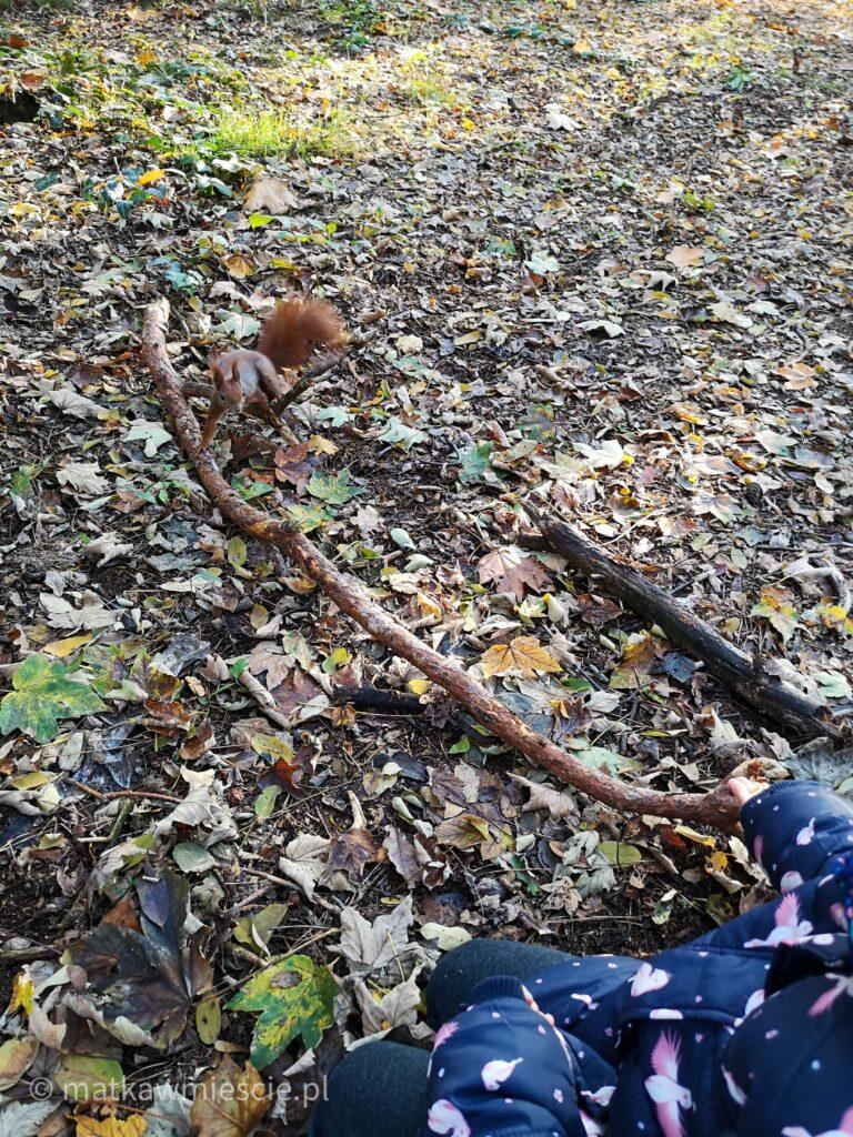 wiewiórka-liście