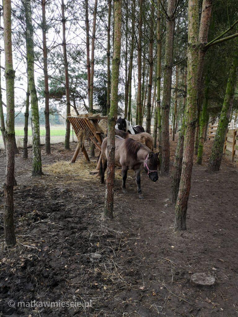 koniki-ranczo-ponym