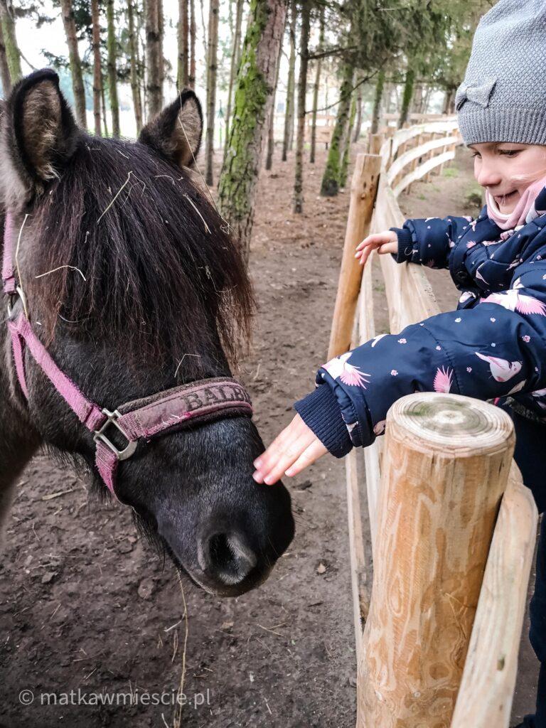 głaskanie-konia