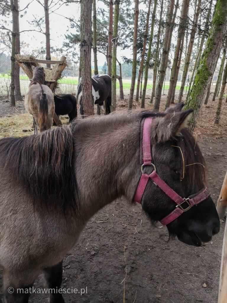 konie-ranczo-pony-m