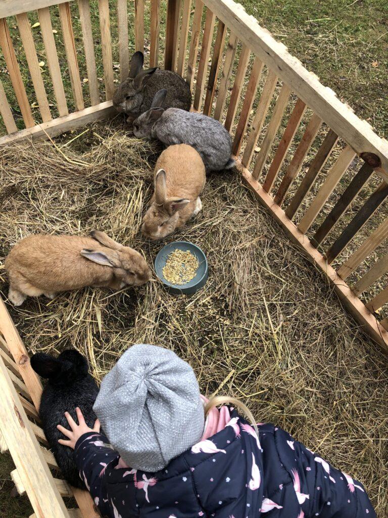 króliki-w-zagrodzie