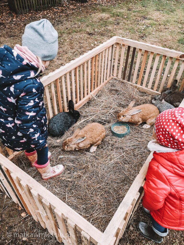 króliki-zagroda