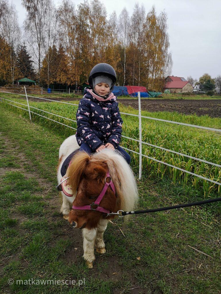 kuc-szetlandzki-ranczo-pony-m