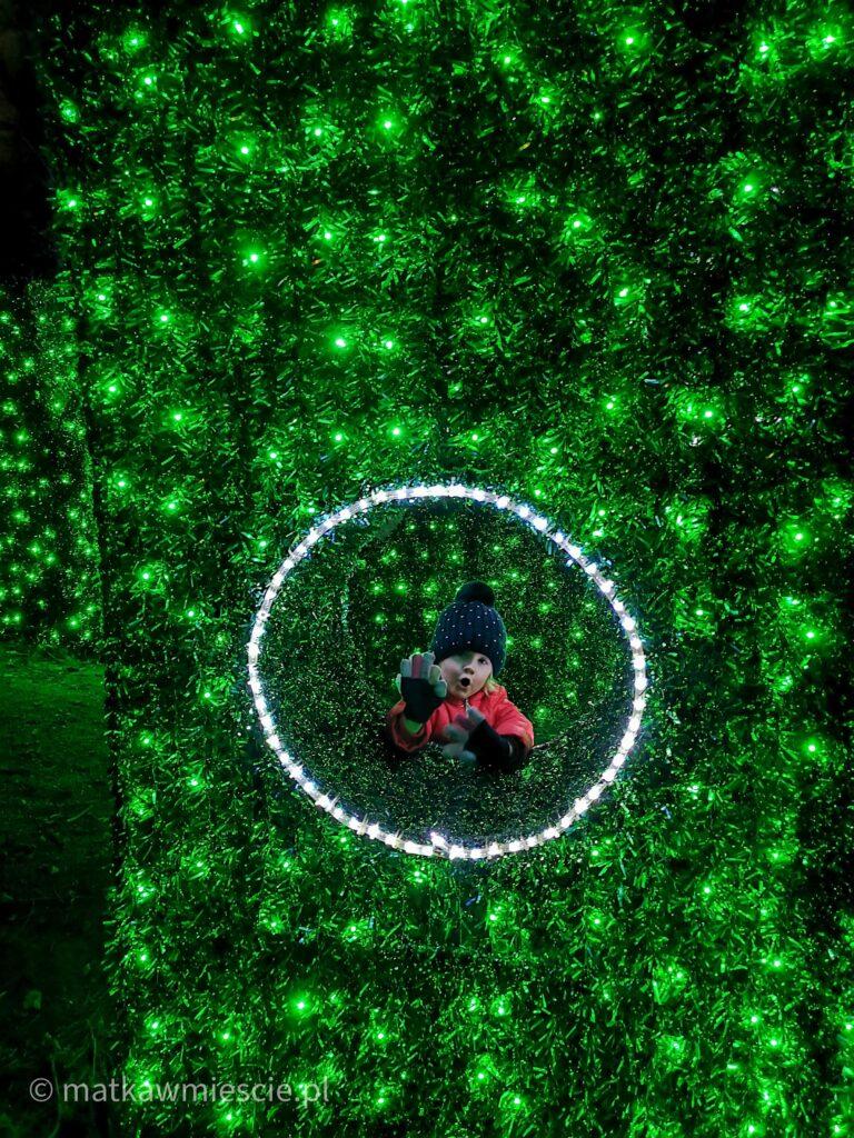 park-iluminacji-okienko-zywoplot