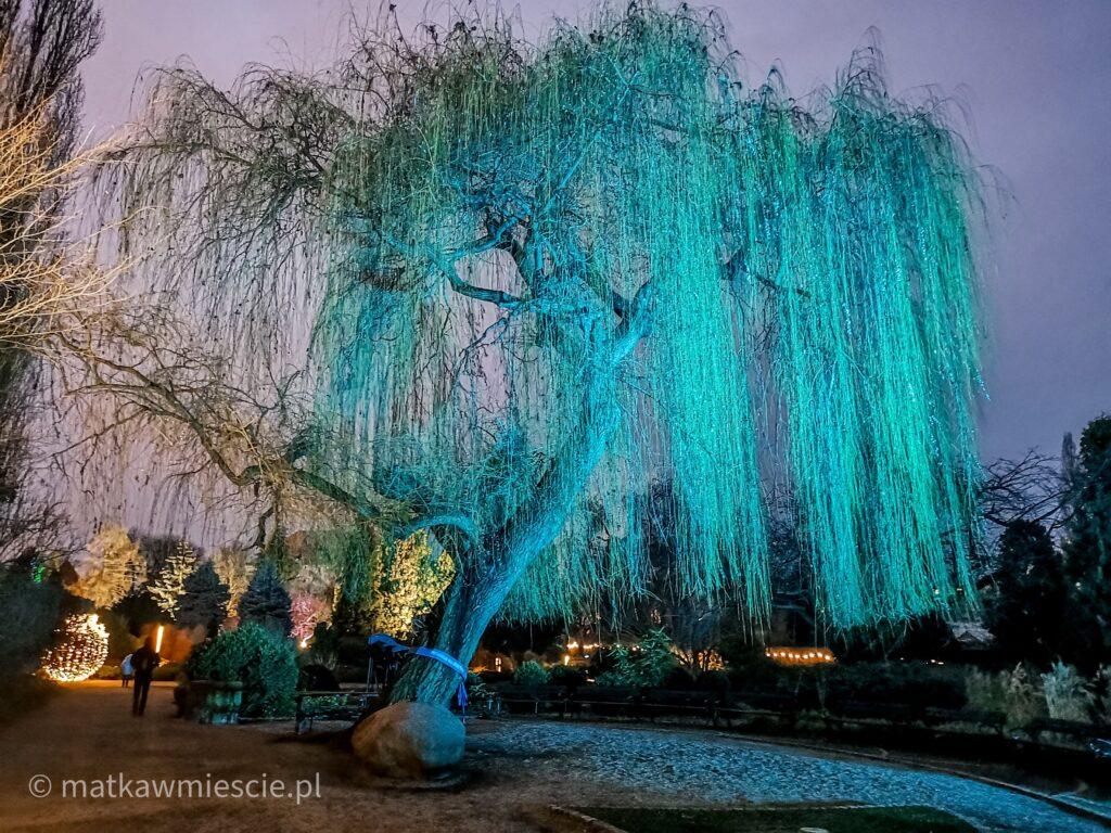 niebieskie-drzewo