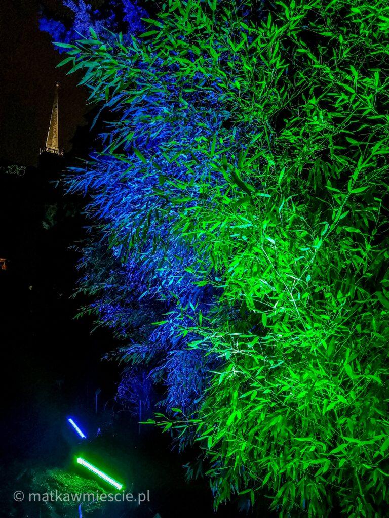oświetlone-rośliny