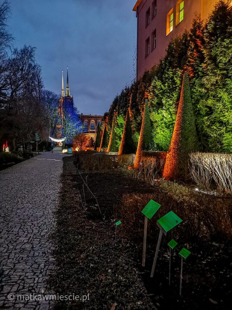 ogród-botaniczny-światla