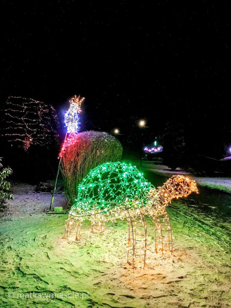 żółw-ogrody-świateł