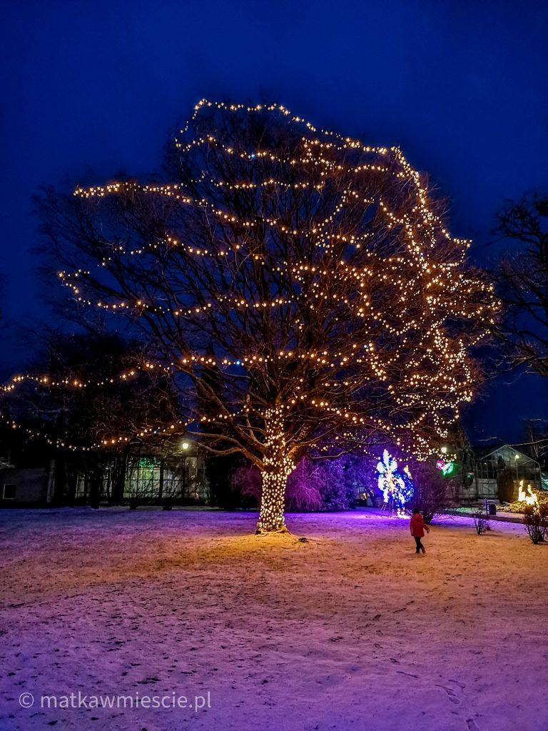 drzewo-światła-palmiarnia