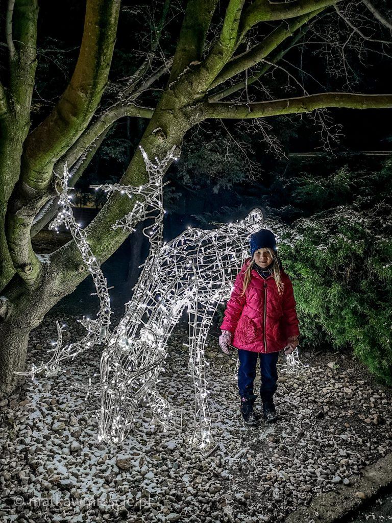 ogrody-świateł-renifer