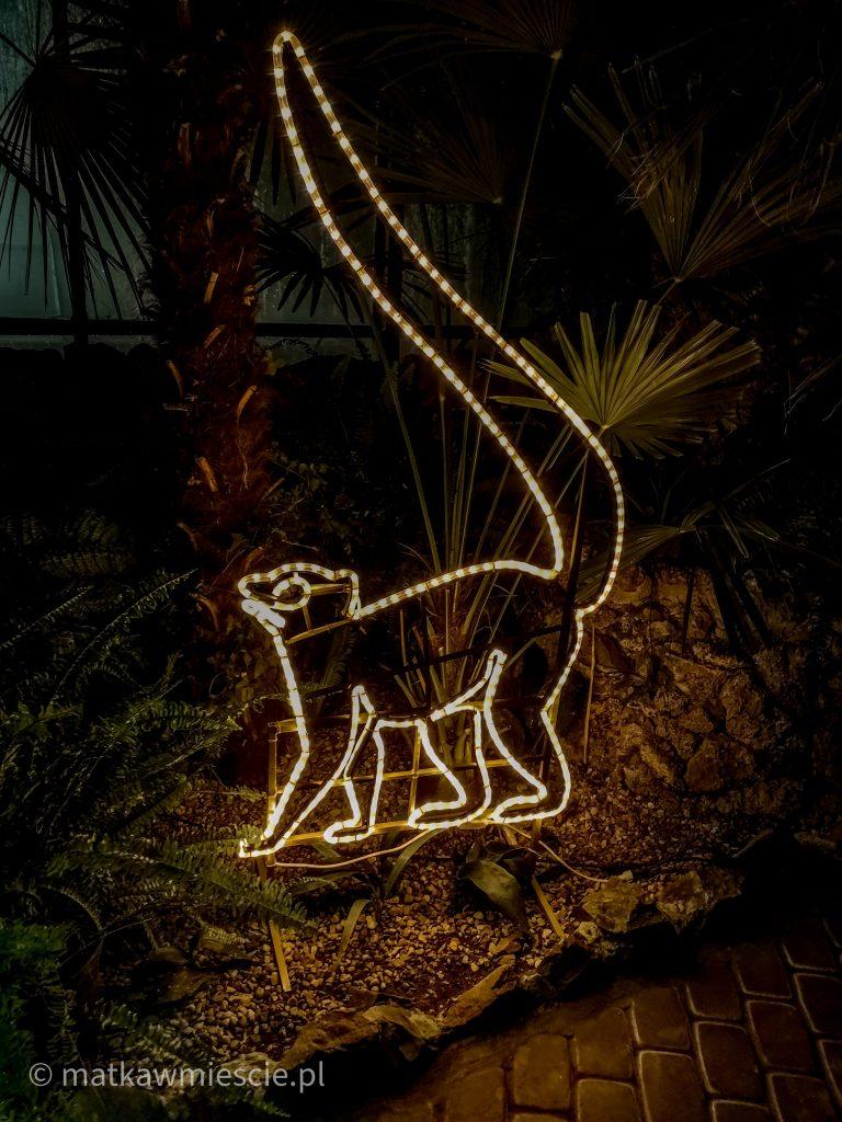 lemur-palmiarnia