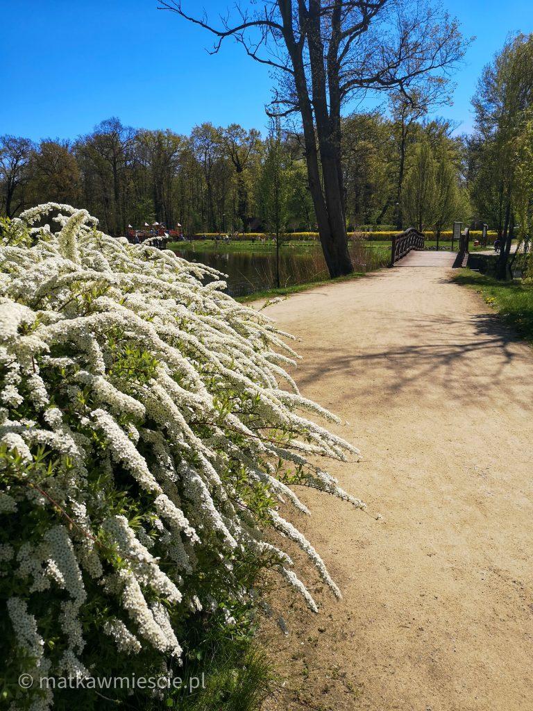 wiosna-park-żmigród