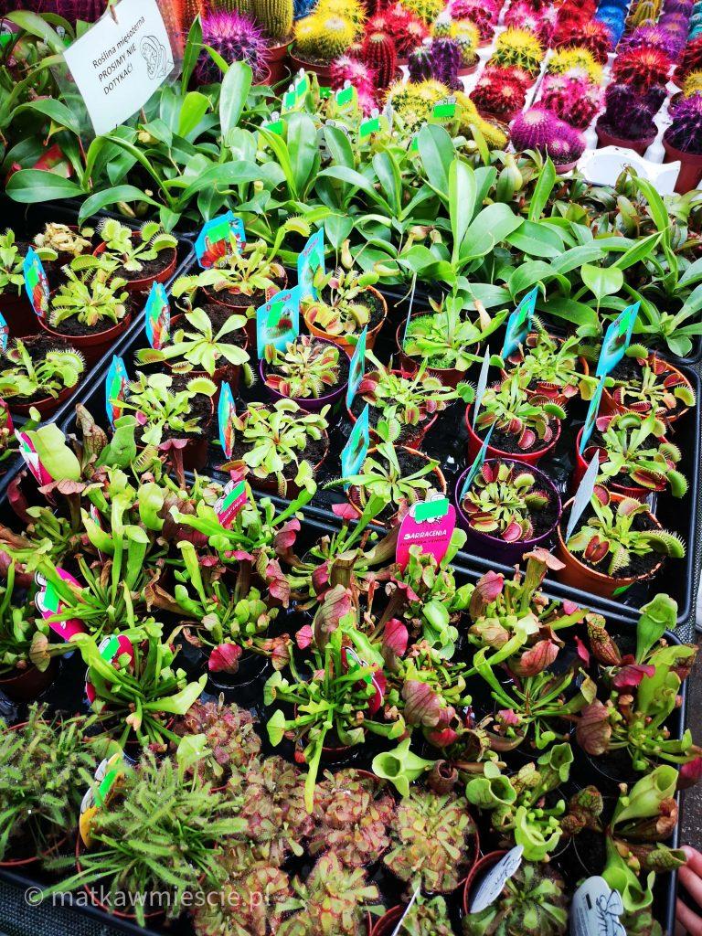 punkt-sprzedaży-roślin