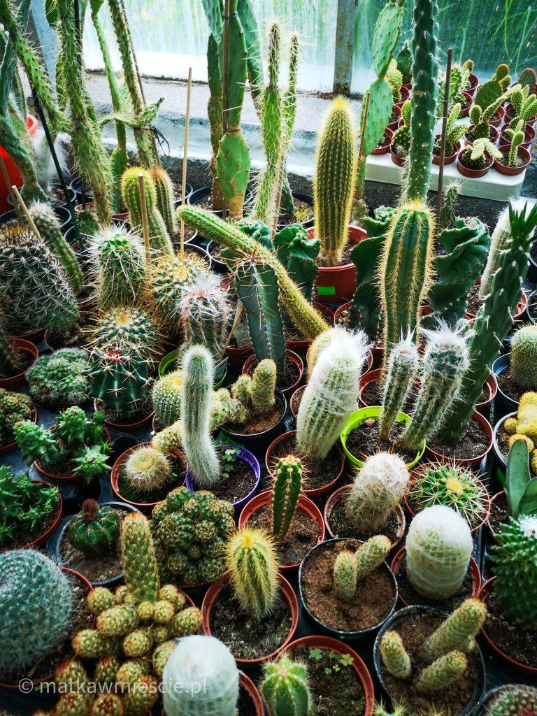 kaktusy-palmiarnia-wałbrzych